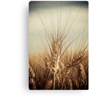 Wheat... Canvas Print