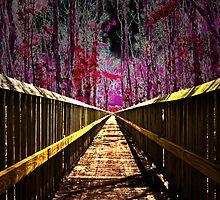 Complex Trail by Michael Damanski