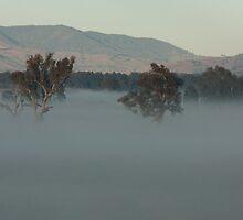 Foggy Paddocks  by Timo Balk