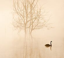 Misty Morning by Cathy Middleton