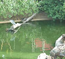Herons enjoying a relaxing day on a stump in a lake by Joseph Green