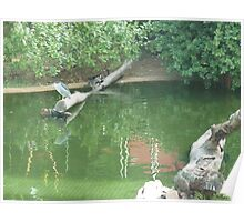Herons enjoying a relaxing day on a stump in a lake Poster