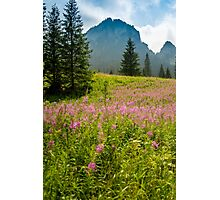 Fireweed Mountains Photographic Print