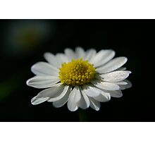 Easter Daisy Photographic Print