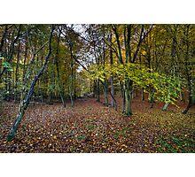 Autumn woodland avenue, Penn Photographic Print