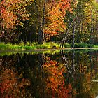 Autumn Reflection by Skye Hohmann