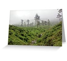 Afoggy valley Greeting Card