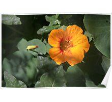 La Belle Fleur Poster