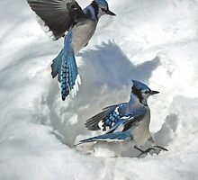 Those Were The Jays by Brian Pelkey