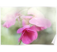 Passionate Pink Poster