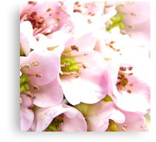 Pink Wednesday Canvas Print