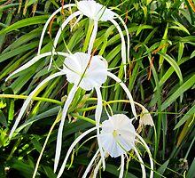 Body, Mind, & Spirit-  Spider Lilies by D. D.AMO