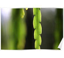 hanging gardens of bokeh Poster