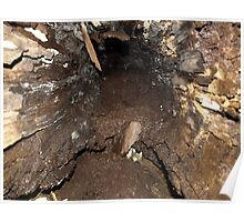 LOOKING INSIDE A LOG Poster