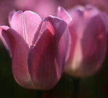 pink twins by bigzed
