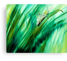 Cri Cri - oil painting of a cricket in the grass Canvas Print