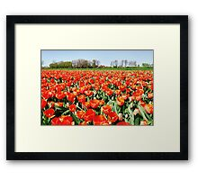 Tulips from Flakkee..... Framed Print