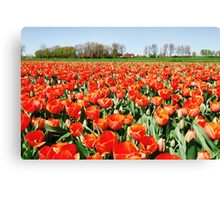 Tulips from Flakkee..... Canvas Print