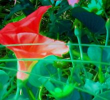 Full morning glory by ♥⊱ B. Randi Bailey