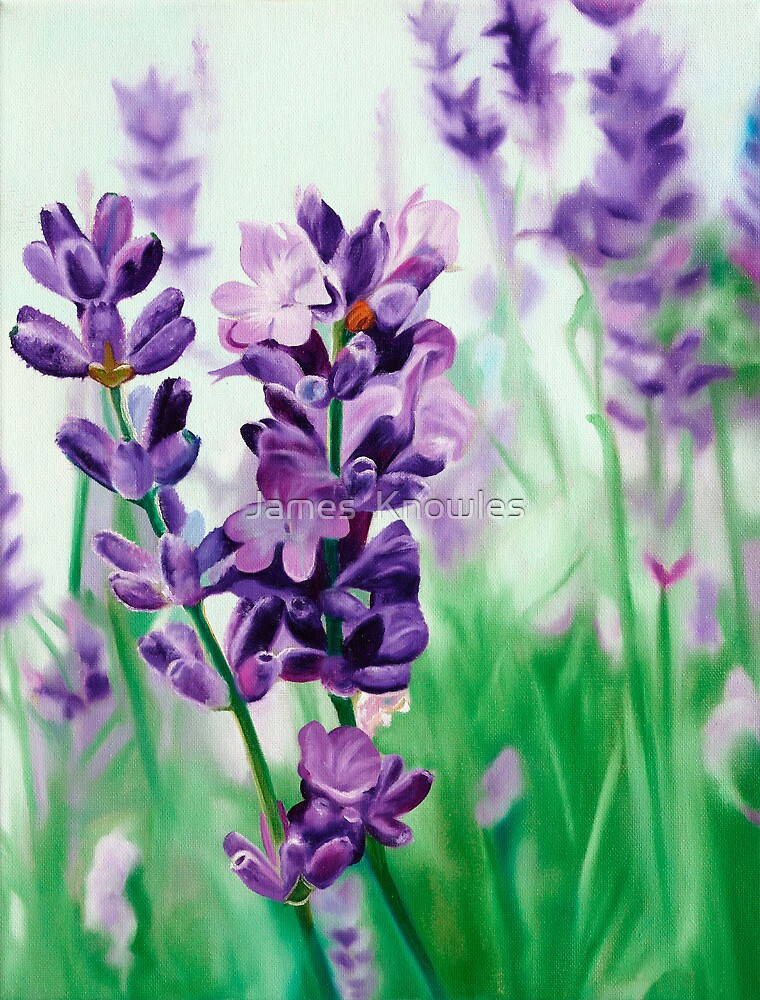 Quot Lavender Lovers Oil Painting Of Lavender Blossoms Quot By