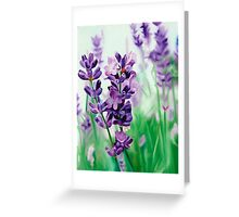 Lavender Lovers - oil painting of lavender blossoms Greeting Card