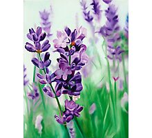 Lavender Lovers - oil painting of lavender blossoms Photographic Print