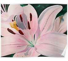 Lily Luster - oil painting of a lily Poster