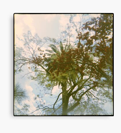 The City of Trees Canvas Print