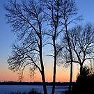 Tree Silhouette @ Sunset over Lake by tom j deters