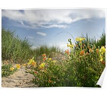 Sand Dune Wildflowers Poster
