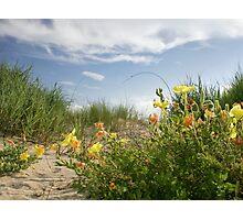 Sand Dune Wildflowers Photographic Print