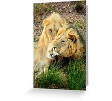 Poignant leader - Lion, South Africa Greeting Card