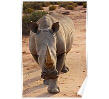 White Rhino - Cape Town, South Africa Poster