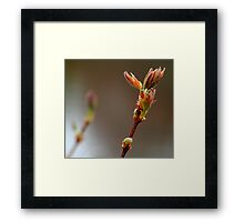 A beauty or bust? Framed Print