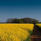 Yellow Carpet by verwoody