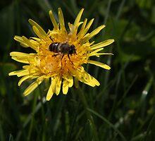 Flying on a dandelion by annalisa bianchetti