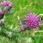 Thistle and Bee by celtusone