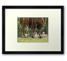 """""""Yes I know, my legs are beautiful!"""" Framed Print"""