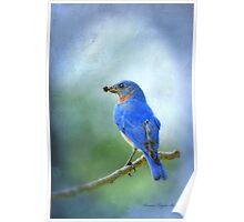 Beautiful Bluebird Poster