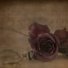 Red Roses For A Blue Lady by TeresaB