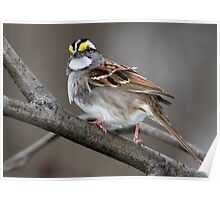 In Hindsight / White Throated Sparrow Poster