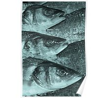 Fish on the slab Poster