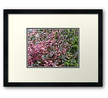 Lost Among The Blossoms Framed Print