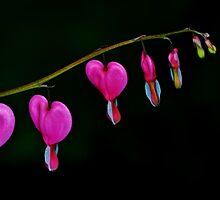 Bleeding Love by Wendy Brusca