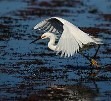 Walking on Water by Tom Dunkerton