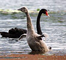 Look Mum! Look at Me! by Joy Rensch