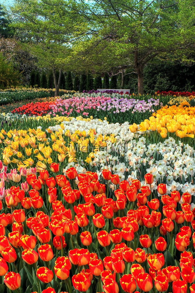 Botanical Garden by Michael Mill