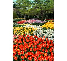 Botanical Garden Photographic Print
