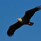 In Flight by Tom Dunkerton