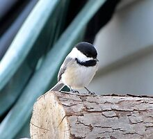 Chickadee on Abstract by Veronica Schultz